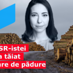 USR-ista Ciceală taie mii de arbori și intermediază vânzarea a zeci de mii de hectare de păduri pentru exploatare forestieră